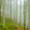 19  G Trail and Fog S V