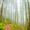 17  G Trail Up Fog V