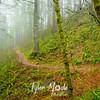 25  G Trail Up Fog