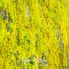 16  G Moss
