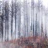 3  G Burned Forest Fog