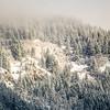 26  G Snowy Trees