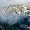 18  G Snowy Trees