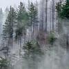 11  G Trees and Fog V