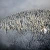 16  G Snowy Trees