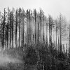 5  G Burned Forest Fog BW