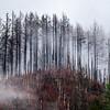 4  G Burned Forest Fog