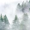 8  G Trees and Fog V