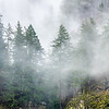 7  G Burned Forest Fog V