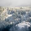17  G Snowy Trees