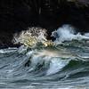 6  G Cape D Waves Close