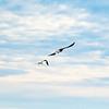 9  G Cape D Eagle and Seagull