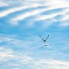 10  Cape D Eagle and Seagull