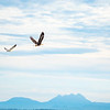 8  G Cape D Eagle and Seagull
