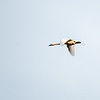 20  G Swan