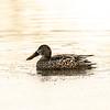 3  G Duck