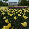 UMB-parken, tulipaner