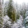 31  G Snowy Forest Scene