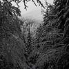 57  G Snowy Road BW V