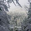 52  G Snowy Trees