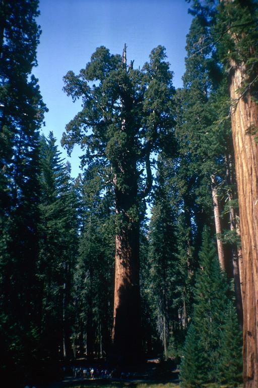 General Sherman Tree, Sequoia National Park