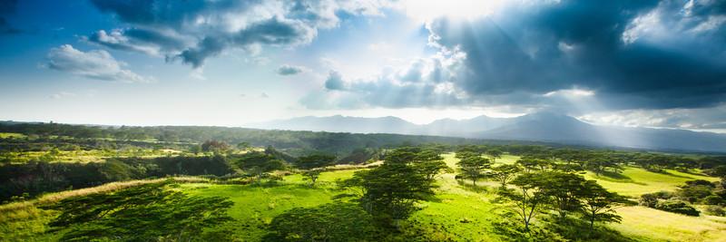 Golden Fields of Oahu