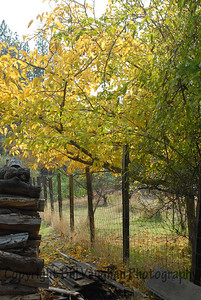 Autumn Wood Pile
