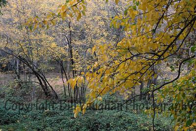 Bancroft Rd, Auburn, Ca.  Fall 2007