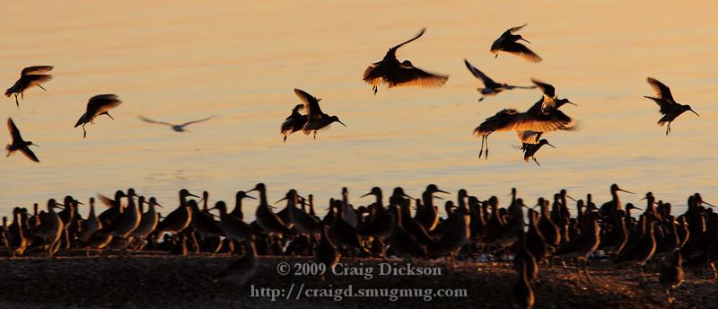 2009.10.25 Seabirds at Sunrise