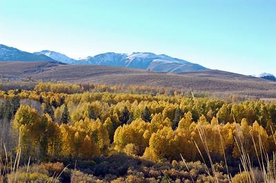 2010 Fall Drive