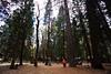 Yosemite Pioneers' Cemetery