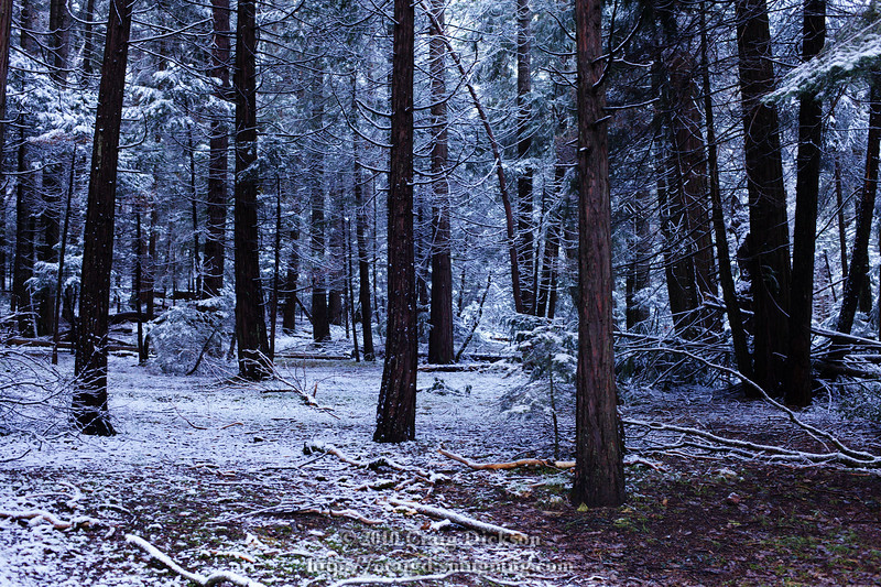 Trees near Bridalveil Fall