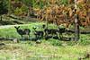 Deer near Foresta