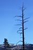 Tree, Foresta