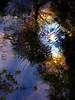 Fern Spring reflection #4
