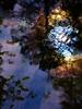 Fern Spring reflection #2