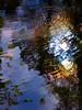 Fern Spring reflection #1