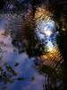 Fern Spring reflection #3