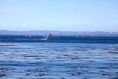 The Sunday fishing fleet in Monterey Bay, 10/31/10