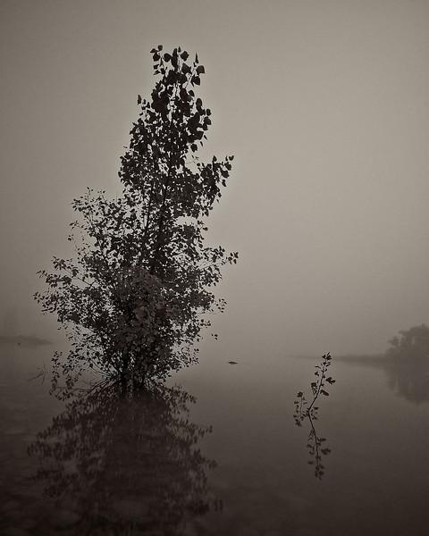 TekapoTrip_2011-03-13_06-06-34_DSC_0027_©RichardLaing(2011)