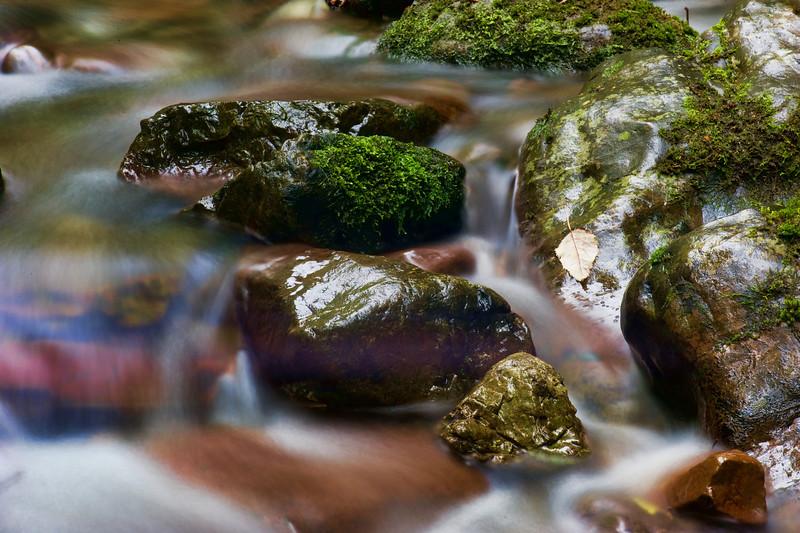 GlenTui_2011-05-01_14-15-29_DSC_3787_©RichardLaing(2011)