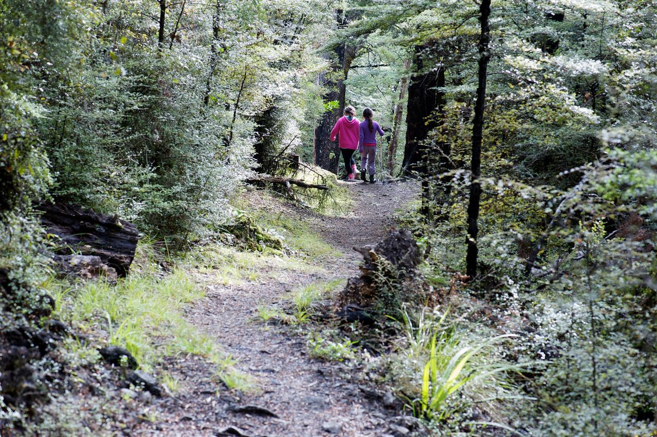 GlenTui_2011-05-01_12-57-25_DSC_3736_©RichardLaing(2011)