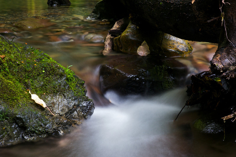 GlenTui_2011-05-01_14-17-45_DSC_3798_©RichardLaing(2011)