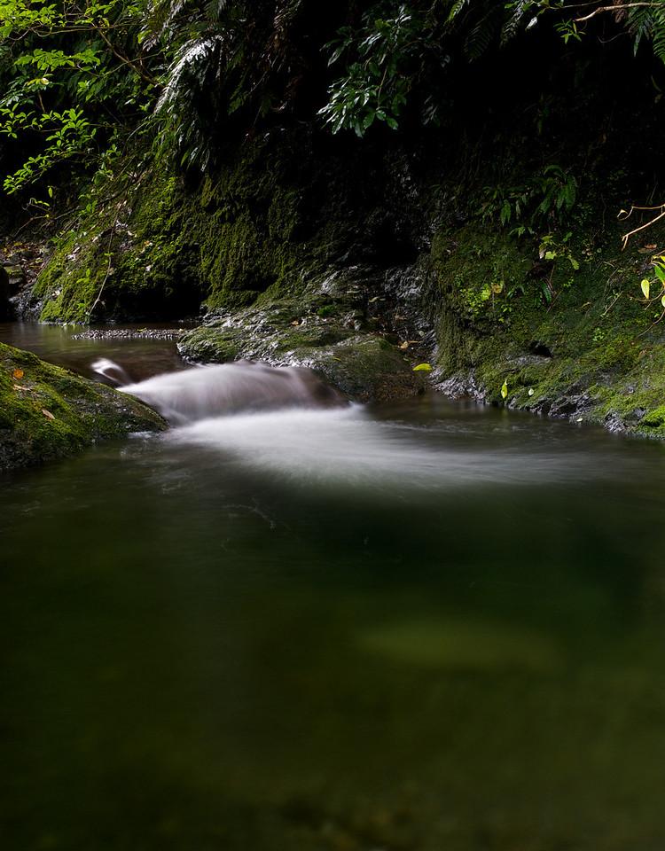 GlenTui_2011-05-01_14-30-25_DSC_3825_©RichardLaing(2011)