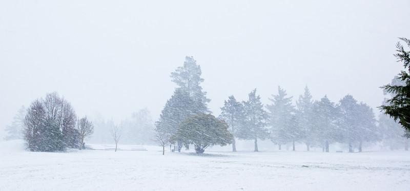 Snow_2011-08-15_09-22-16_DSC_6637_©RichardLaing(2011)