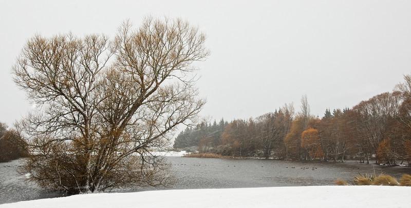 Snow_2011-08-15_09-56-02_DSC_6675_©RichardLaing(2011)