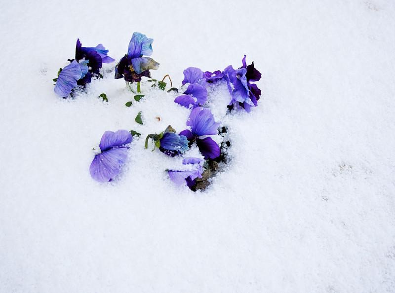 Snow_2011-08-15_09-17-02_DSC_6634_©RichardLaing(2011)