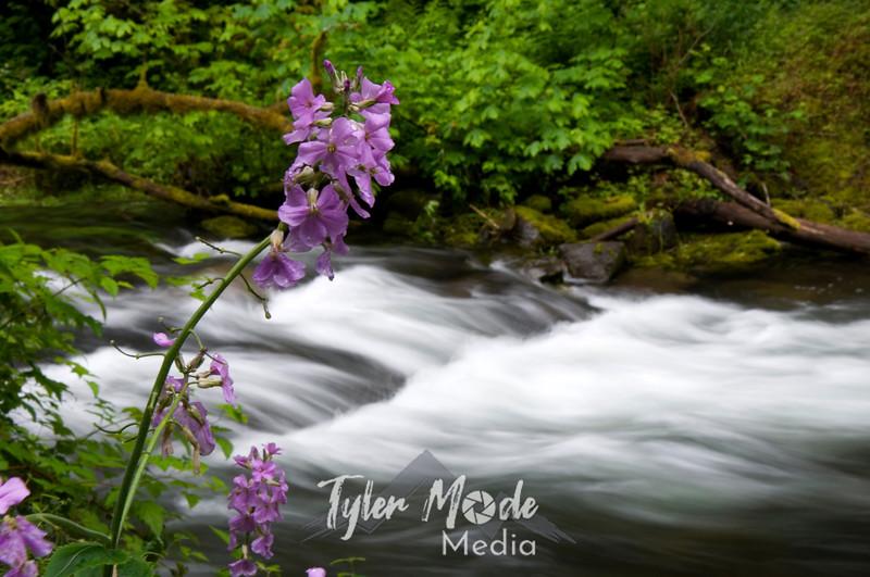 May, Tanner Creek, Oregon