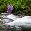 Tanner Creek, Oregon