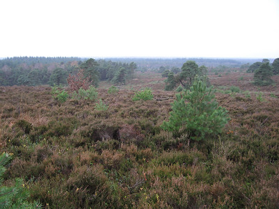 NS wandeling Holterberg